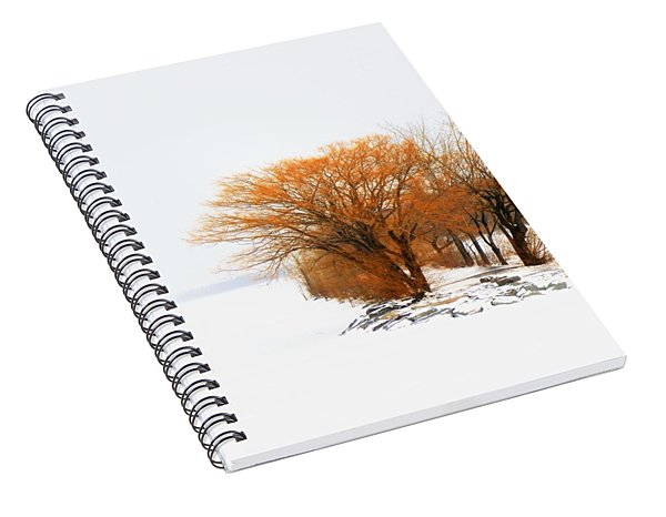 Tree In The Winter Spiral Notebook