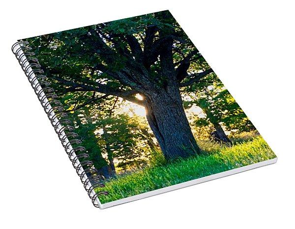 Treescape Spiral Notebook
