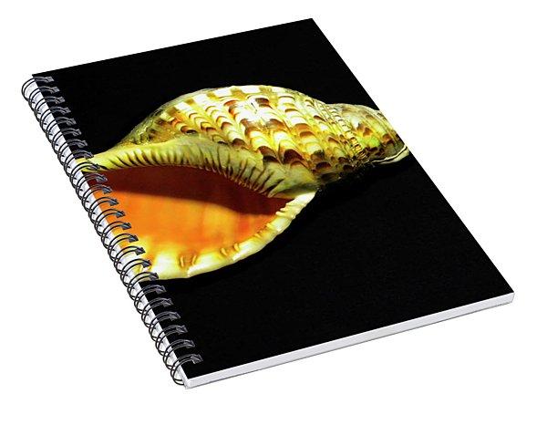 Triton Trumpet Seashell Cymatium Tritonis Spiral Notebook