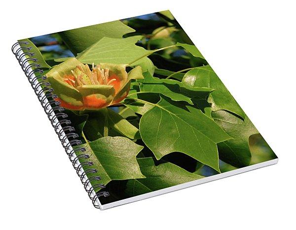 Tulip Poplar Spiral Notebook