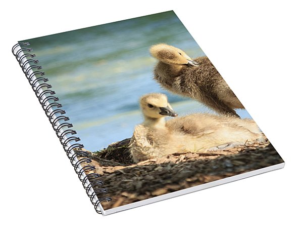 Two Little Goslings Spiral Notebook