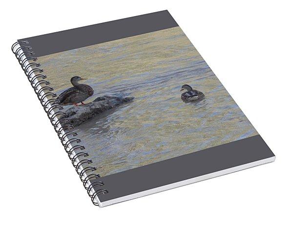 Two Mallard Ducks Spiral Notebook