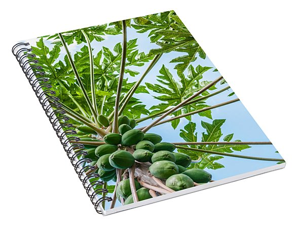 Up The Papaya Spiral Notebook