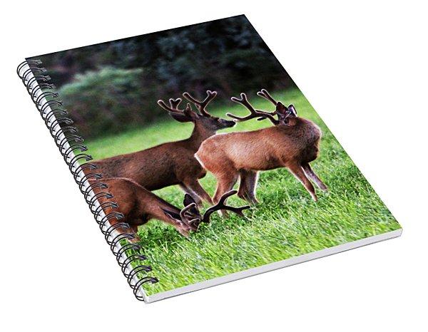 Velvet Antlers In The Sunset Spiral Notebook