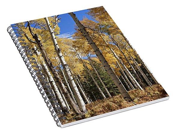 Vibrancy Of Autumn IIi Spiral Notebook