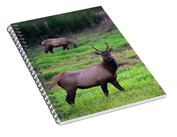 Vigilant Spiral Notebook
