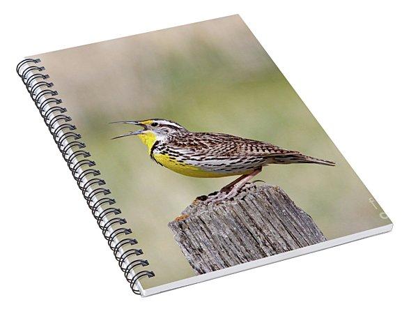 Western Meadowlark Spiral Notebook