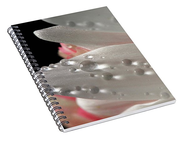 White And Pink Petals Spiral Notebook