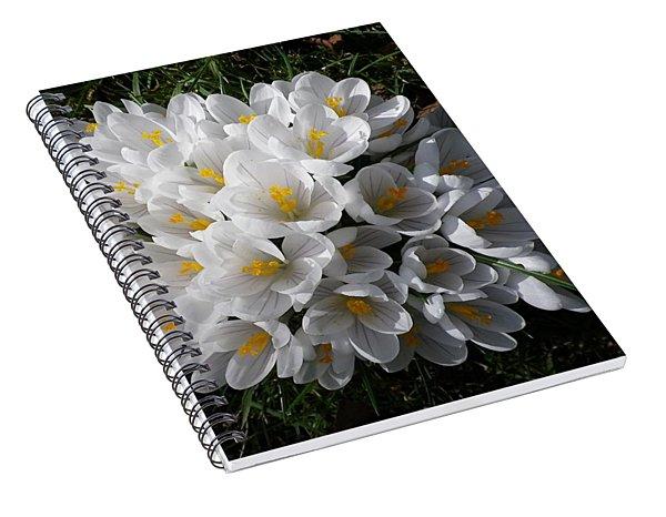 White Crocuses Spiral Notebook