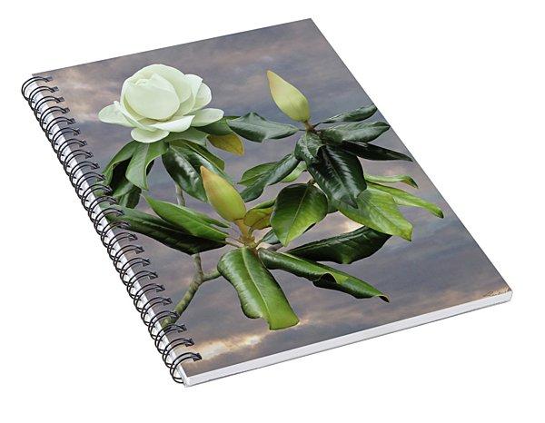 White Magnolia Tree Spiral Notebook