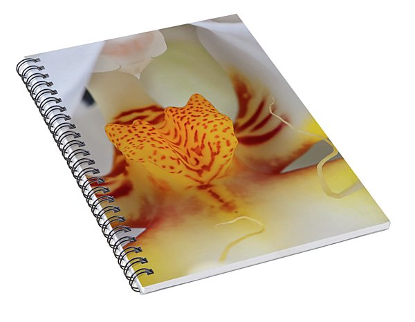White Phalaenopsis Orchid 2 Spiral Notebook