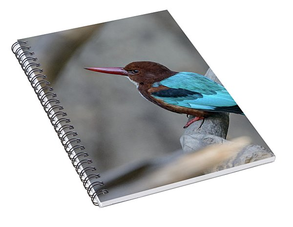 White-throated Kingfisher 02 Spiral Notebook