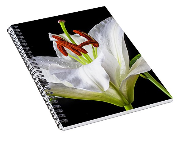 White Tiger Lily Still Life Spiral Notebook
