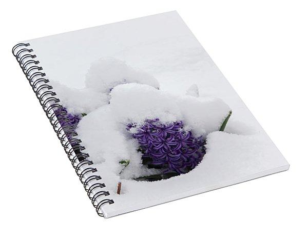Winter In Spring Hyacinth Spiral Notebook
