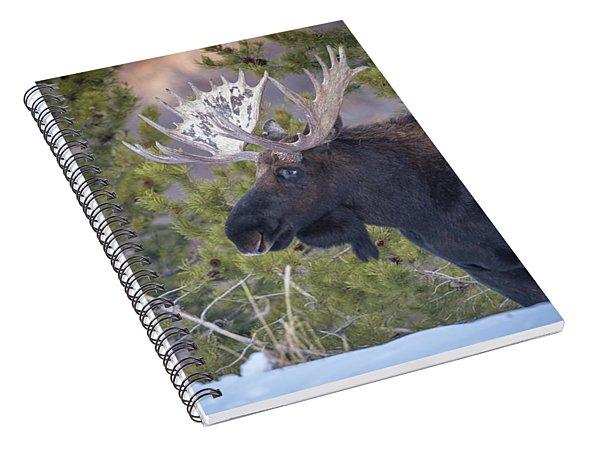 Winter's Arrival  Spiral Notebook