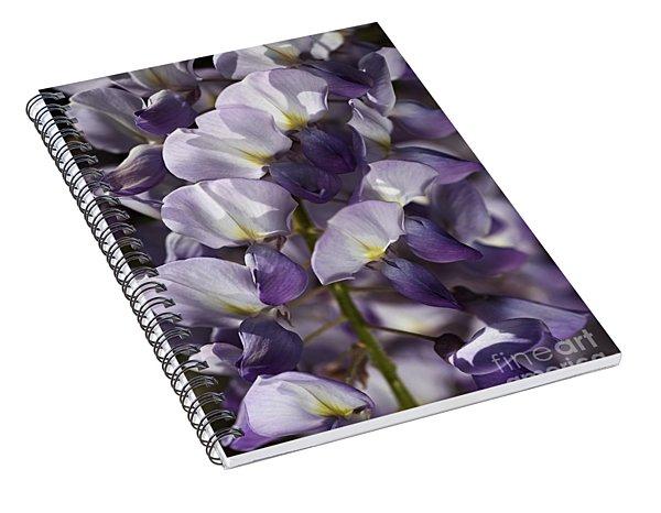Wisteria In Spring Spiral Notebook