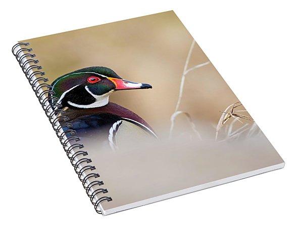 Wood Duck Or Carolina Duck Portrait Spiral Notebook