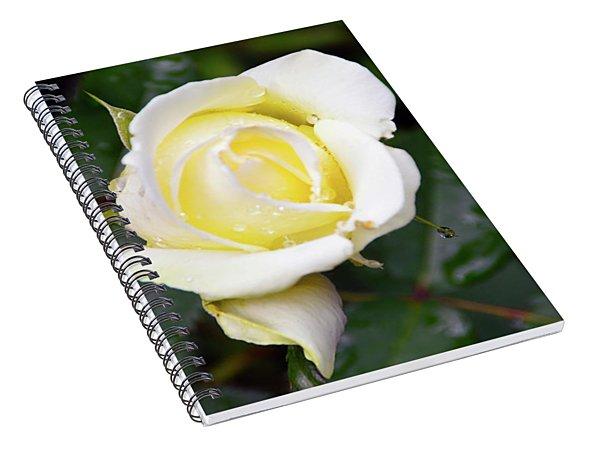 Yellow Rose 1 Spiral Notebook