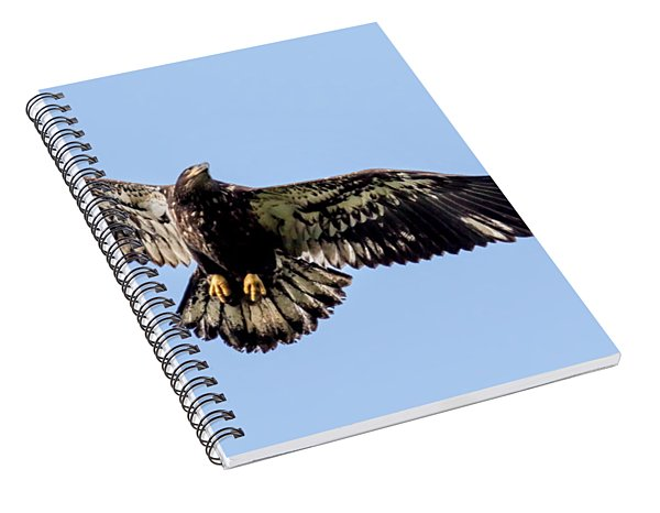Young Bald Eagle Flight Spiral Notebook