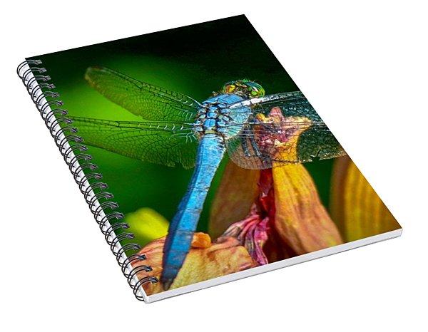 Blue Dragonfly Spiral Notebook