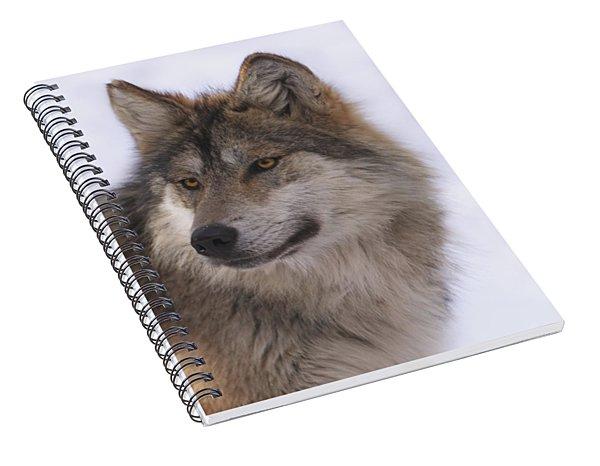 Mexican Grey Wolf Spiral Notebook