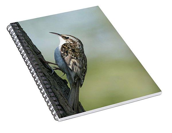 Treecreeper Spiral Notebook