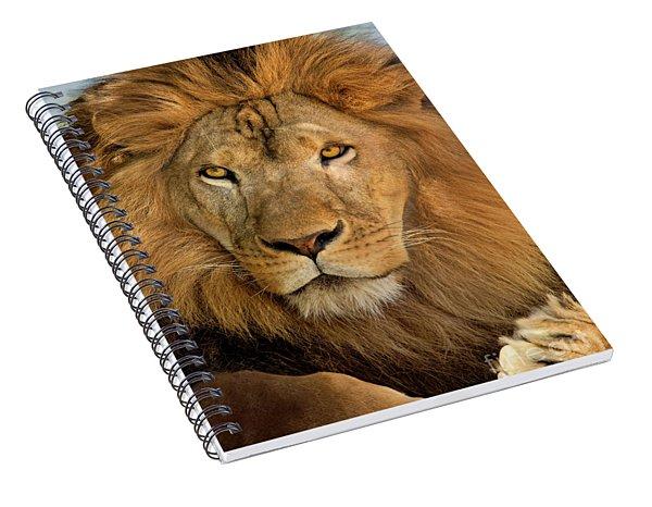 656250006 African Lion Panthera Leo Wildlife Rescue Spiral Notebook