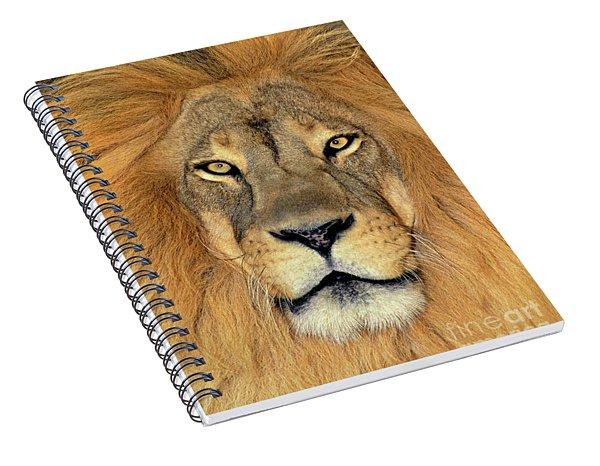 African Lion Portrait Wildlife Rescue Spiral Notebook
