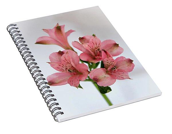 Alstroemeria Up Close Spiral Notebook