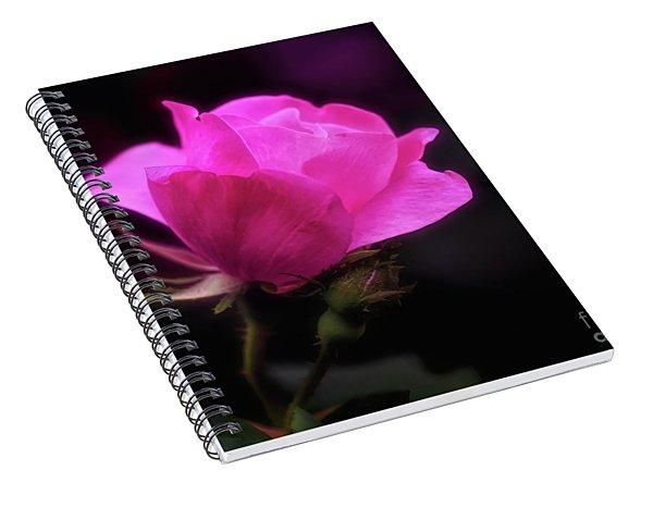 Anniversary Rose Spiral Notebook