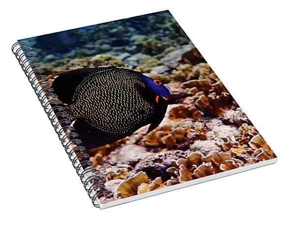 Spiral Notebook featuring the photograph Aruban French Angelfish by Lars Lentz