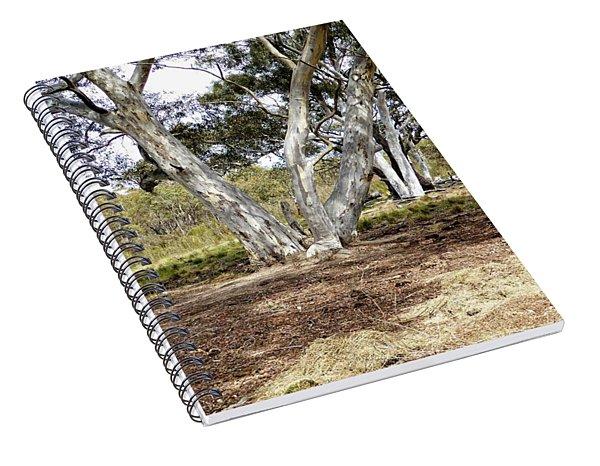 Australian Bush Scene Spiral Notebook