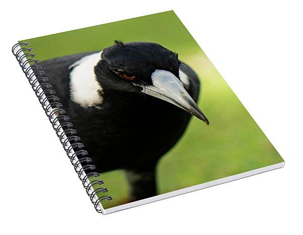 Australian Magpie Outdoors Spiral Notebook
