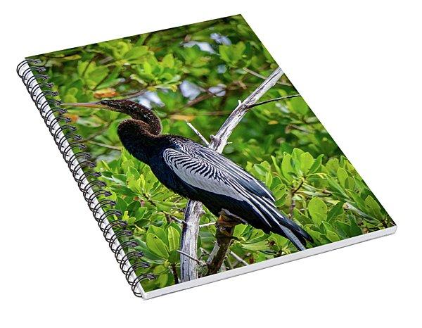 Beautiful Anhinga Spiral Notebook