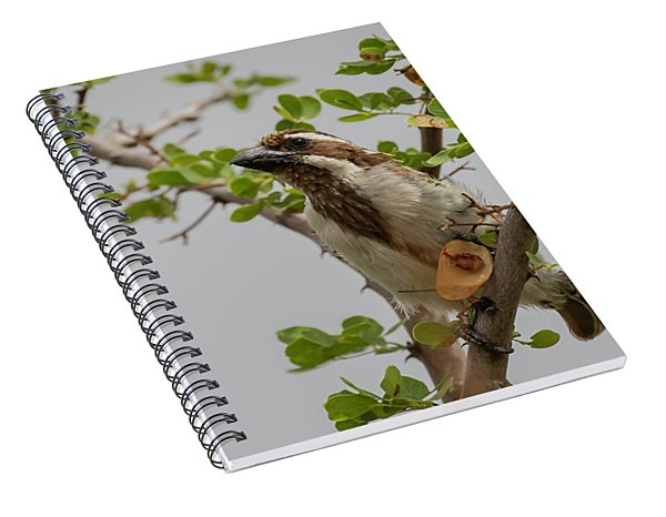 Black-throated Barbet Spiral Notebook