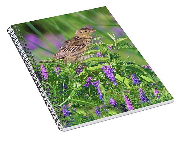 Bobolink Spiral Notebook