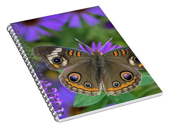 Buckeye Beauty Spiral Notebook
