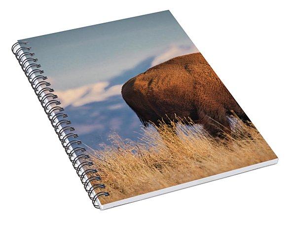Buffalo Grazing At Dawn Spiral Notebook