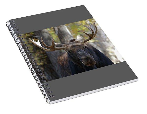 Bull Moose Close Up Spiral Notebook