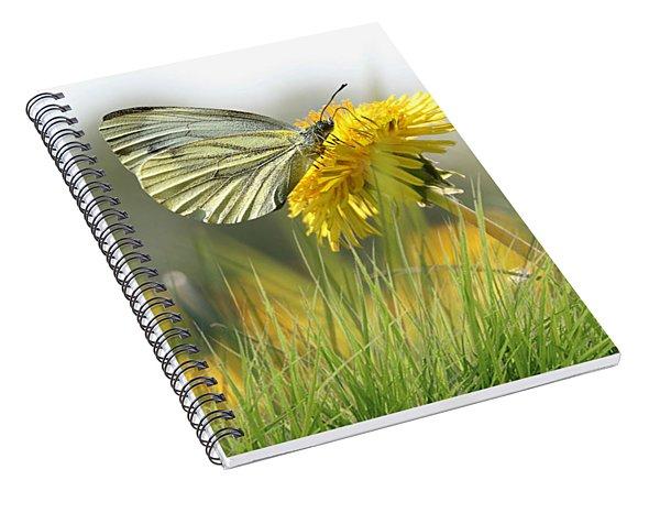 Butterfly On Dandelion Spiral Notebook