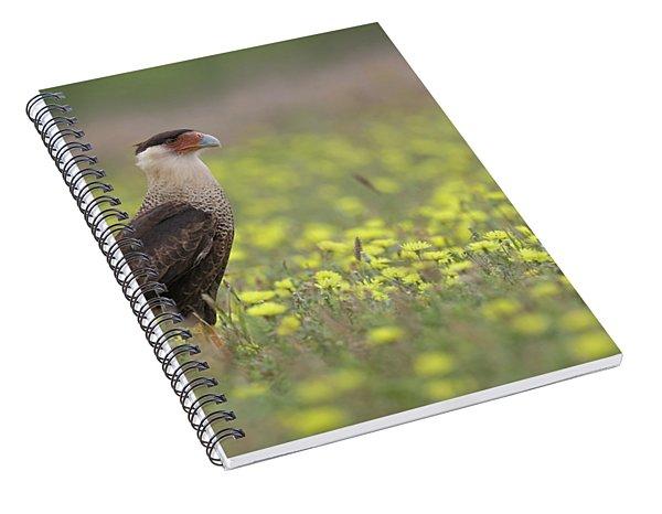 Caracara In Spring Spiral Notebook