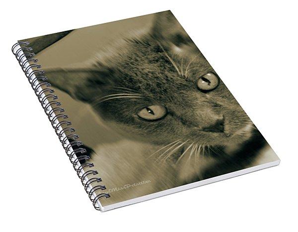 Cat Boticas Portrait 9 Spiral Notebook