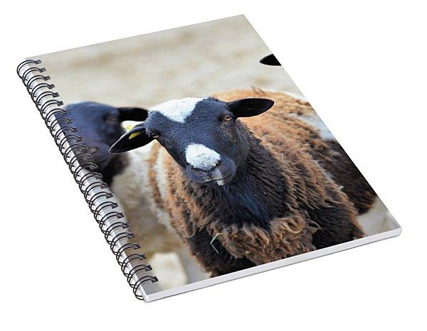 Curious Hair Sheep Spiral Notebook