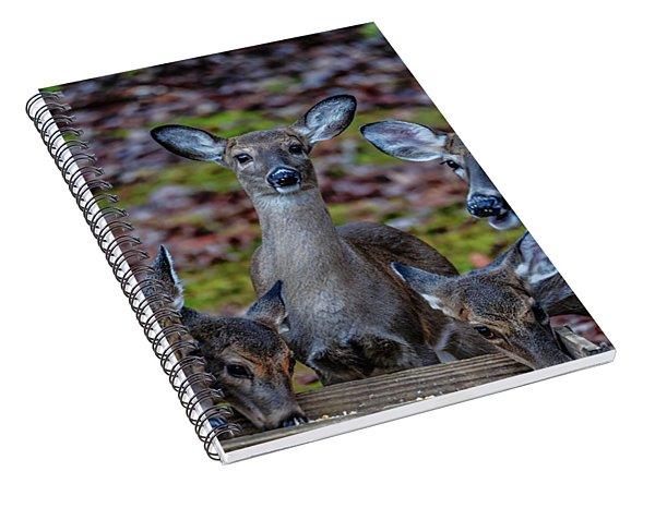 Deer Gathering Spiral Notebook