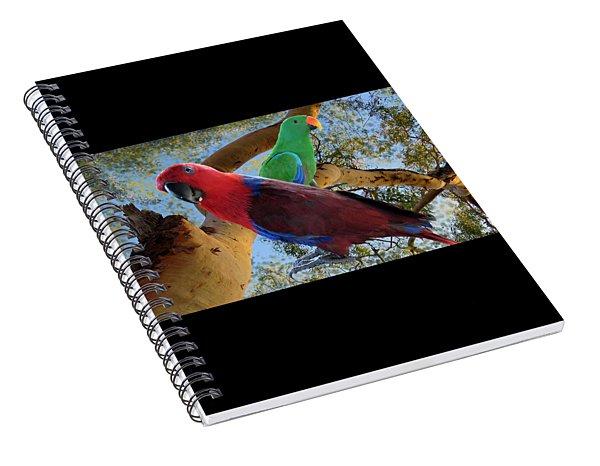 Eclectus Parrots Spiral Notebook