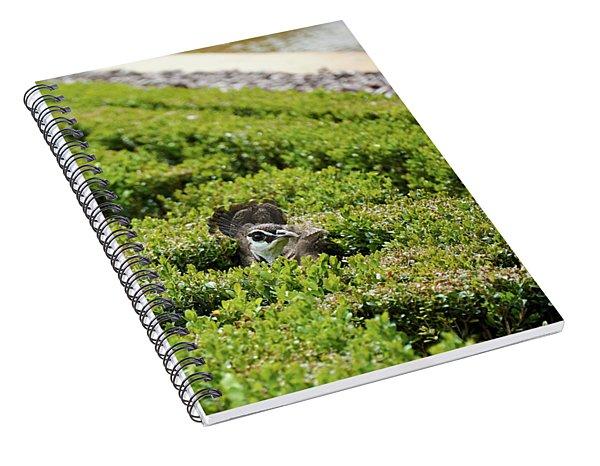 Female Peafowl Among The Bushes In Retiro Park, Madrid, Spain Spiral Notebook