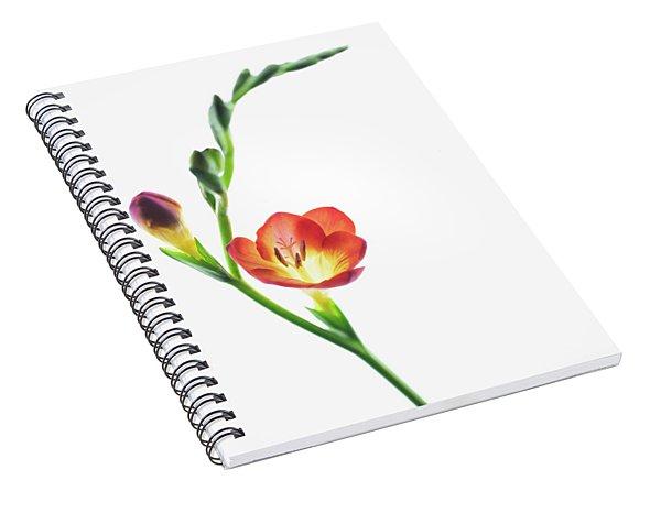 Freesia 2 Spiral Notebook