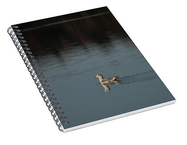 Herring Gull Spiral Notebook
