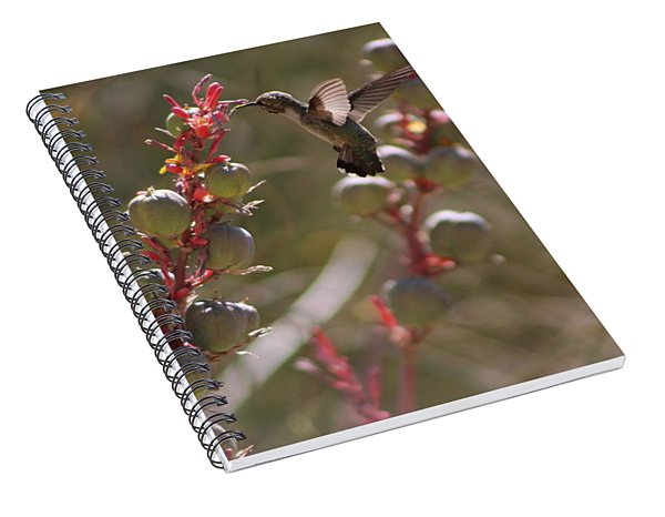 Hummingbird Flying To Red Yucca 3 In 3 Spiral Notebook