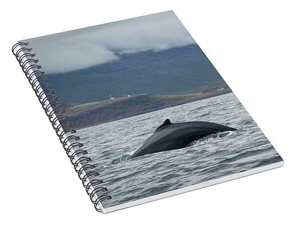 Humpback 1 Spiral Notebook